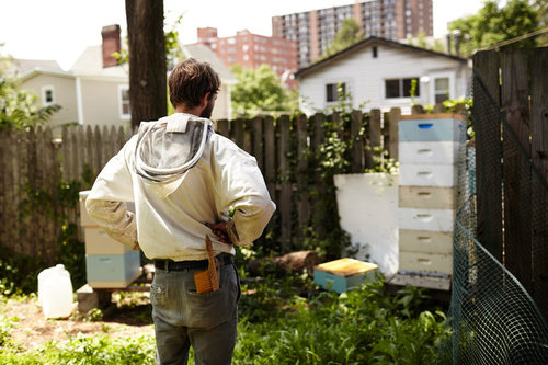 A young man stands in his back yard looking at bee hive boxes.