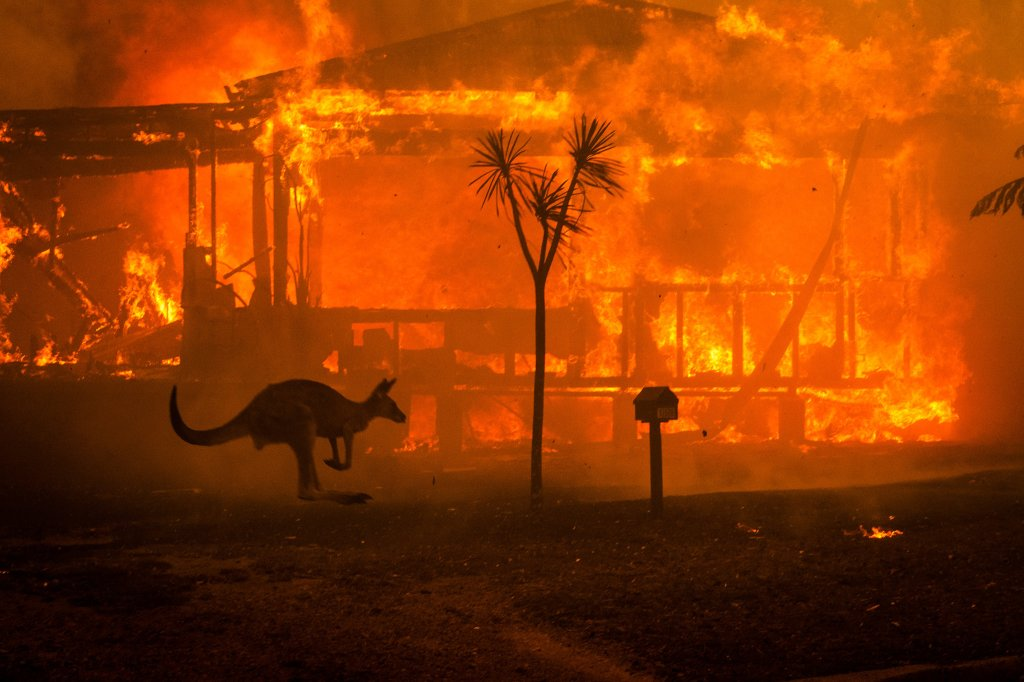 Kangaroo hopping past a building on fire